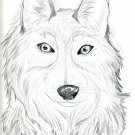 "Original Wolf Drawing Titled ""Illusive"""