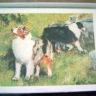 Australian Shepherd #4 Dog Notecards Envelopes Set - Maystead - NEW