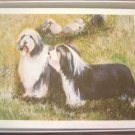 Bearded Collie #4 Dog Notecards Envelopes Set - Maystead - NEW