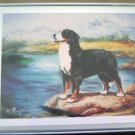 Bernese Mountain Dog #2 Dog Notecards Envelopes Set - Maystead - NEW