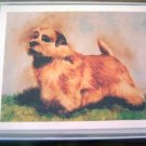 Norfolk Terrier #1 Dog Notecards Envelopes Set - Maystead - NEW