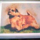 Norfolk Terrier #1 Dog Notecards Envelopes Set - Maystead - NEW