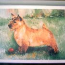 Norwich Terrier #1 Dog Notecards Envelopes Set - Maystead - NEW