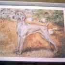 Weimaraner #2 Dog Notecards Envelopes Set - Maystead - NEW