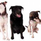 The Ultimate Dog eBook Collection - Amazing offer for 12 Super Dog Books