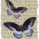 Powerder Blue Butterfly Vintage Art Print 12x8 FREE SHIPPING shabby chic