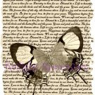 Clemantine Butterfly in sepia Vintage Art Print 12x8 FREE SHIPPING shabby chic