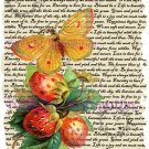 Strawberry Butterfly Vintage Art Print 12x8 FREE SHIPPING shabby chic