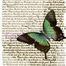 Aqua Green Butterfly Vintage Art Print 12x8 FREE SHIPPING shabby chic