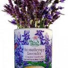 Gifts That Bloom Aromatherapy Lavender Garden Kit