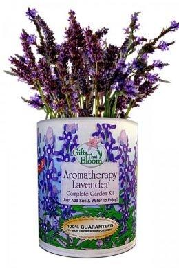 Gifts That Bloom Aromatherapy Lavender Garden Kit