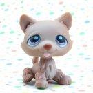 Littlest Pet Shop #39 Brown husky Dog ~ LPS  Winter Puppy