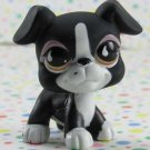 Littlest Pet Shop #826 Boxer Dog ~ LPS Sportiest