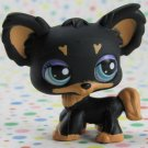 Littlest Pet Shop #1571 Chihuahua Dog ~ LPS Collector's Pack