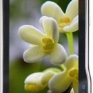 Unlocked Motorola XT711 3G Cell Phone---Brown