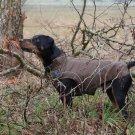 "Warm Dog Winter Coat w/ Fleece Lining, (XXL) 23-1/4"", Brown"