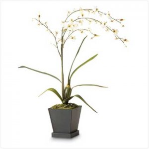 White Orchids in Pot