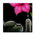 Ceramic Tile Coaster from art painting Cat 513 flower