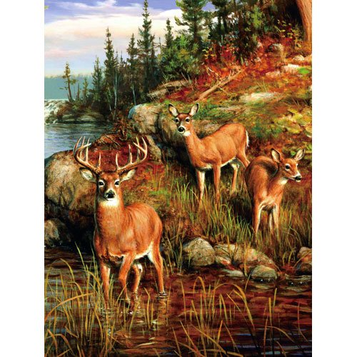 Colorful Nature three Deer Woods Multi Colored Queen Mink Style Blanket