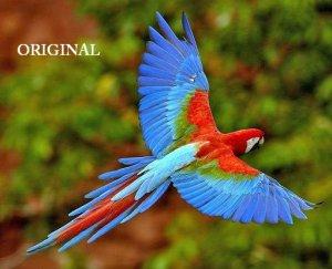 Macaw In Flight Cross Stitch Pattern Birds Parrots ETP
