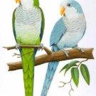 2 Quaker Parrots Cross Stitch Pattern Birds ETP
