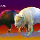 2 Buffalo in Color Cross Stitch Pattern Indian Western ETP