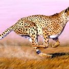 Plains Cheetah Cross Stitch Pattern Cats ETP
