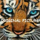 Blue Eyed Tiger Cross Stitch Pattern Cats ETP