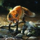 Fox Cross Stitch Pattern Dogs  ETP