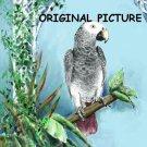 Timneh African Grey Cross Stitch Pattern Parrots Birds ETP