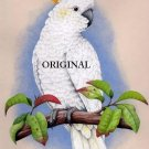 Sulfur Crested Cockatoo Cross Stitch Pattern Parrots Birds ETP