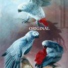 3 African Greys Cross Stitch Pattern Parrots Birds ETP