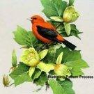 Scarlet Tananger Cross Stitch Pattern Birds ETP