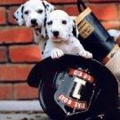 Dalmation Pups Cross Stitch Pattern Fire Dogs ETP
