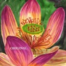 Passion Flower Cross Stitch Pattern Tropical ETP