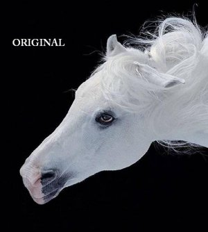 White Stallion Portrait Cross Stitch Pattern Horses Equine ETP
