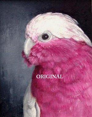 Pink Galah Cockatoo Cross Stitch Pattern Parrots Birds ~ETP~