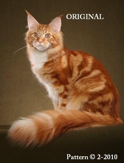 'Sunny' ~ Maine Coon Cross Stitch Pattern Cats ~ETP~