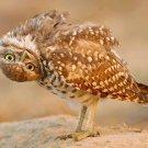 Upside Down Owl Cross Stitch Pattern Birds ETP
