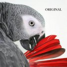 African Grey Parrot ~Counted~ Cross Stitch Pattern ~Computer Generated~ ETP