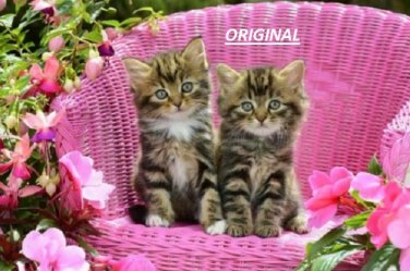 Kittens in Pink... ~Counted~ Cross Stitch Pattern ETP