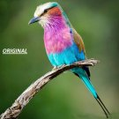 Lilac Breasted Roller... ~Counted~ Cross Stitch Pattern ETP