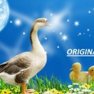 Goose & Goslings... ~Counted~ Cross Stitch Pattern ETP