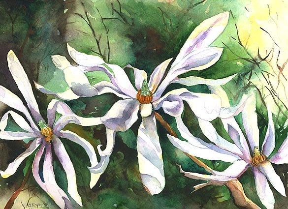 Original Watercolor Star Magnolias Painting
