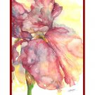 8 Watercolor Red Iris Notecards Note cards