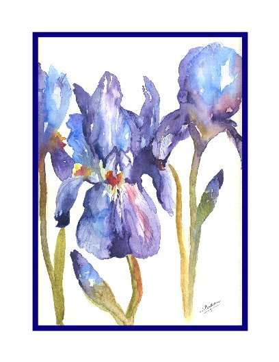 Set of Eight Purple Irises Watercolor Note Cards