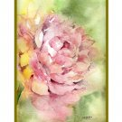 Set of 8 Watercolor Whisper of a Peony Note Cards