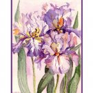 8 Watercolor Iris Greeting Note Cards Notecards