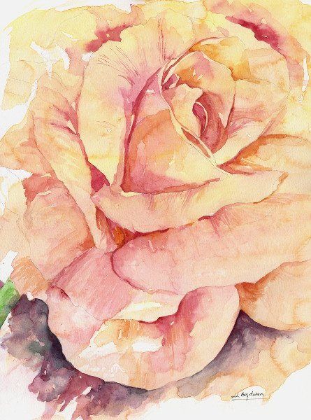 Original Watercolor Magnificent Rose Painting