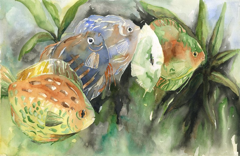 Original Discus Watercolor and Ink Painting